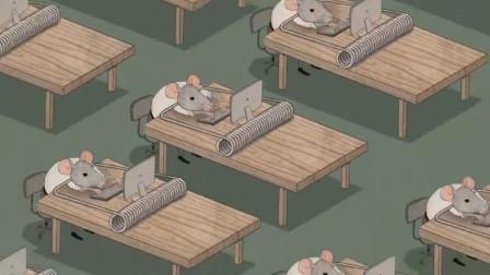老鼠为了追求幸福,毕业后来到大城市,每天只能全电脑桌前!