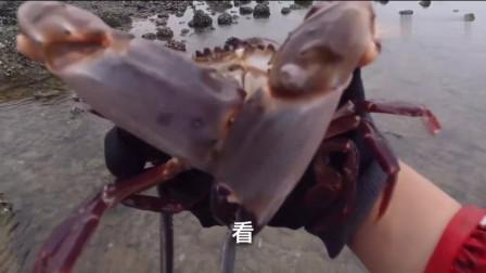小伙清早出门赶海,抓了不少面包蟹和赤甲红,这一只真的超级大!