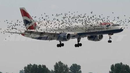现代技术完美解决了鸟类撞击飞机的可能性?