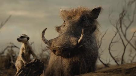 小狮王回归,为了穿过戒备森严的空地,不得不派跑高手