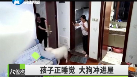 大狗溜进邻居家直接往人身上扑,请拴好你家狗狗!