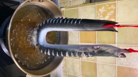 大鳗鱼这样做,一辈子吃不够