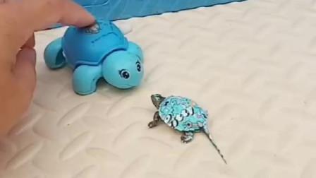 小乌龟找妈妈,以为猪妈妈是它的妈妈,最后小乌龟找到了妈妈