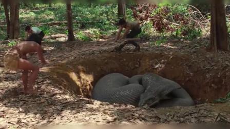 巨型蟒蛇吃掉妻子,丈夫独守孤岛变成野人,只想为妻子报仇!