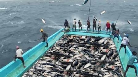 出海抓鱼才能发财,出一次海,赚的钱能养活一年真不假!