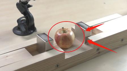 """铷磁铁的""""磁性""""多恐怖?老外用苹果实验,简直惨不忍睹!"""