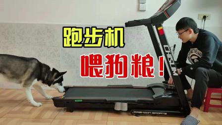 主人太懒,利用跑步机给二哈喂狗粮,这也行?