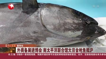 视频|外商备展进博会 南太平洋联合馆大目金枪鱼抵沪