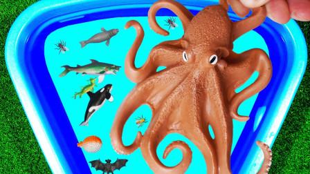 学习海洋动物知识 认识野生动物