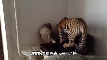 主人扮无脸男吓唬猫咪,结果太好笑了,镜头记录全过程