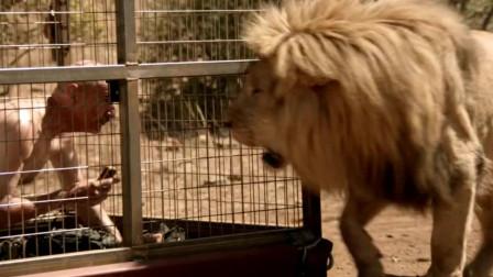 异形魔怪:大叔被关在笼子里,没想到引来一只狮子,这下有好戏看了