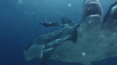 夺命五头鲨:雷德为救队友,独自下海和五头鲨搏斗