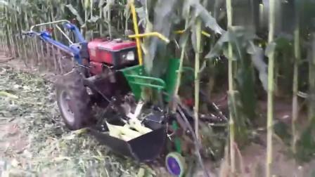 牛人发明:小型全自动玉米收割机,一键操作一键收获,真是太实用了!