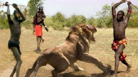 """狮子为什么怕""""马赛人""""?看完你也害怕,镜头记录全过程!"""
