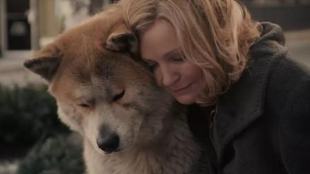 豆瓣9.3,我竟然被一只狗感动到痛哭流涕,看一次哭一次