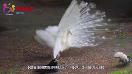 """村民称捡到了一只""""凤凰"""",民警抱其回所里,结果吓得慌忙趴下"""