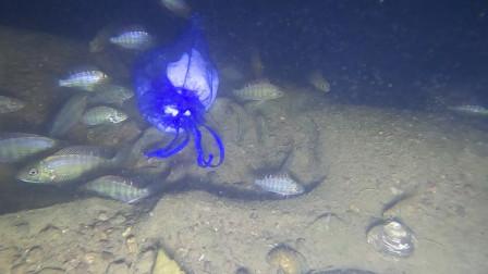 晚上深潭里的鱼太多了,随便放一个诱饵,成群结队的过来吃
