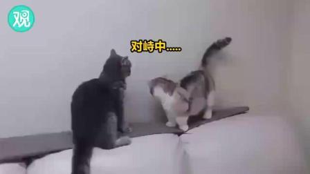手短的猫咪很苦恼