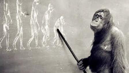 现在的猿猴还能进化成人类吗?科学家发现,已进入石器时代!