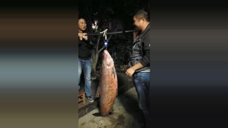 男子在野河钓到近白斤的青鱼,可以请全村的人来吃鱼了!