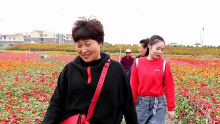 四川成都:在郊区还有这样一个地方,赏花不要门票,秋游好去处!