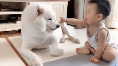 超可爱好笑的狗狗视频合集第四十三弹,治愈你的不开心