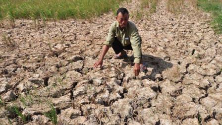 最新研究:华北地区因高温将不再宜居,美科学家的报告可信吗?