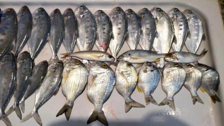 黄鲷鱼和黑鲷鱼都有人工养殖,为什么价格相差大?今天算长见识了