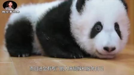 大熊猫被水管直接砸蒙,这可把大熊猫气到了,下一秒请憋住别笑!