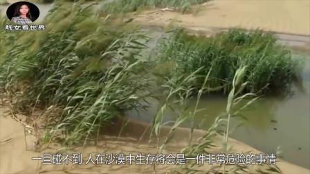 """海水取之不尽,引进沙漠会发生什么?看看国实验的""""后果""""!"""