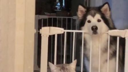 整狗狗:这么香的东西,就让人家看着,闻味,太折磨狗啦