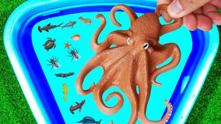海洋生物野生动物 来认识它们吧