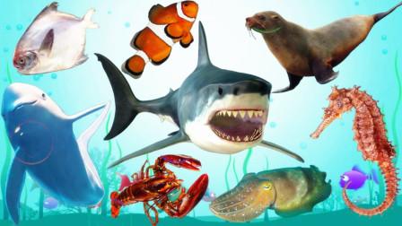 认识海狮等8种海洋动物,小马识动物