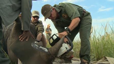 """草原上的犀牛,""""角""""被人类残忍的切割,真是在保护犀牛?"""