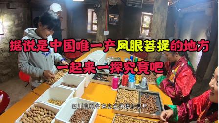 夫妻俩自驾环中国,来到四川甘孜的乡城县,据说是中国唯一产凤眼菩提的地方,来看看它是怎样加工的