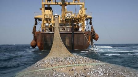 """世界上""""最大""""的渔船,造价高达4亿元,一网可捞近300吨鱼类"""