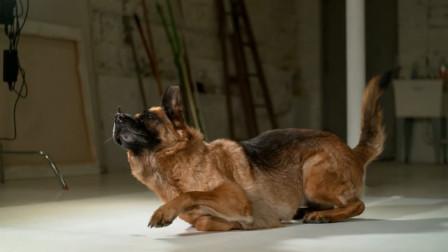 狗狗不被注意的绝技,不到一秒就能站起,高速摄像机下记录一切