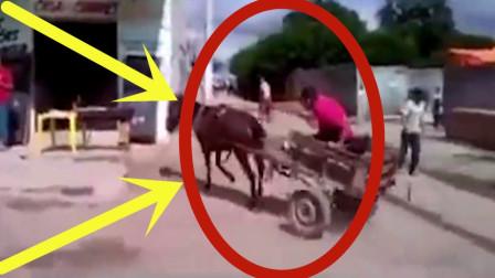 宝马和宝驴的区别,国外的和国内的也有区别