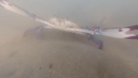 小伙到无人荒岛上赶海抽皮皮虾,却意外收获了不少白贝和三点蟹!