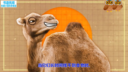 骆驼把所有脂肪集中在身体的一个地方优势是什么 科普知识英语学习