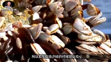 海龟背壳是它最喜欢的地方,只要被寄生,最后慢慢等死
