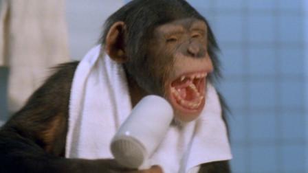 """小猩猩成精爱上洗澡,还知道每天打理""""头发"""",一部搞笑动物电影"""