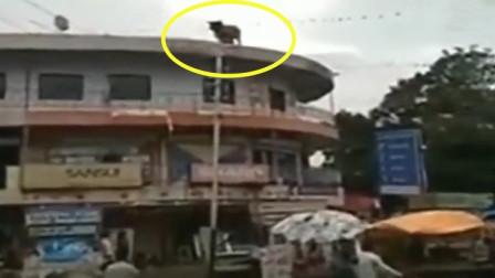 公牛跑上了三楼楼顶,突然不对劲,更可怕的还在后面