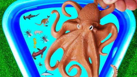 认识蜜蜂章鱼等动物 水池里的小动物