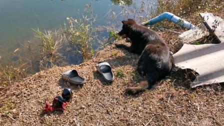 56岁农民不幸摔入水池淹死 忠犬守在池边呜咽