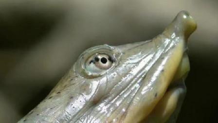 """男子钓鱼发现一只""""大甲鱼"""" ,越看越不对劲报了警, 专家乐坏了"""