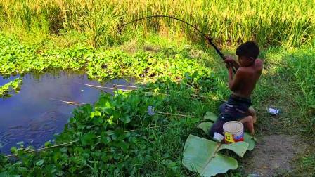 家里没肉吃了,农村男孩去野外钓鱼,6竿齐发,看看钓了多少?