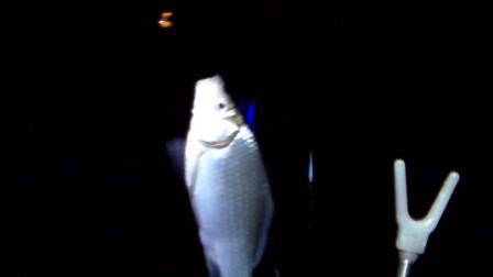 夜钓鲫鱼高清看漂全过程,从抛竿到中鱼吃口漂像,不知道抓口算什么级别