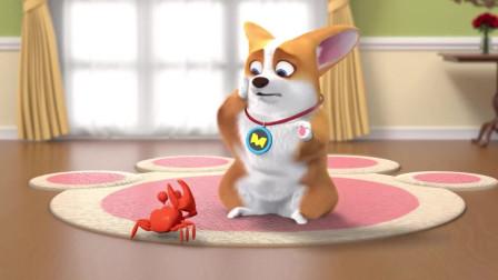 短腿小柯基:狗狗竟被一只螃蟹欺负了