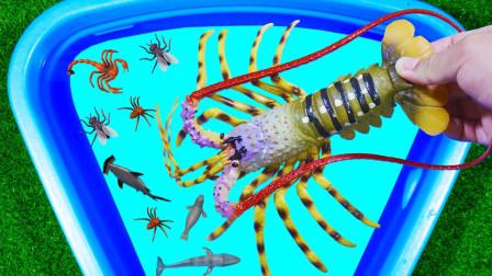 认识动物 乌贼龙虾鹦鹉螺